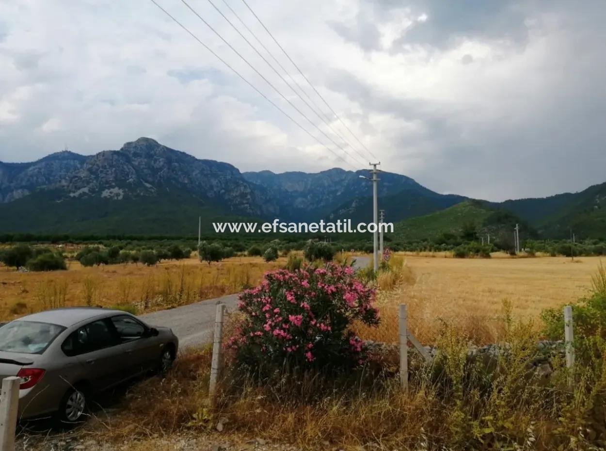 Köyceğiz Zeytinalanı Nda Satılık Tarla, 21.248 M2