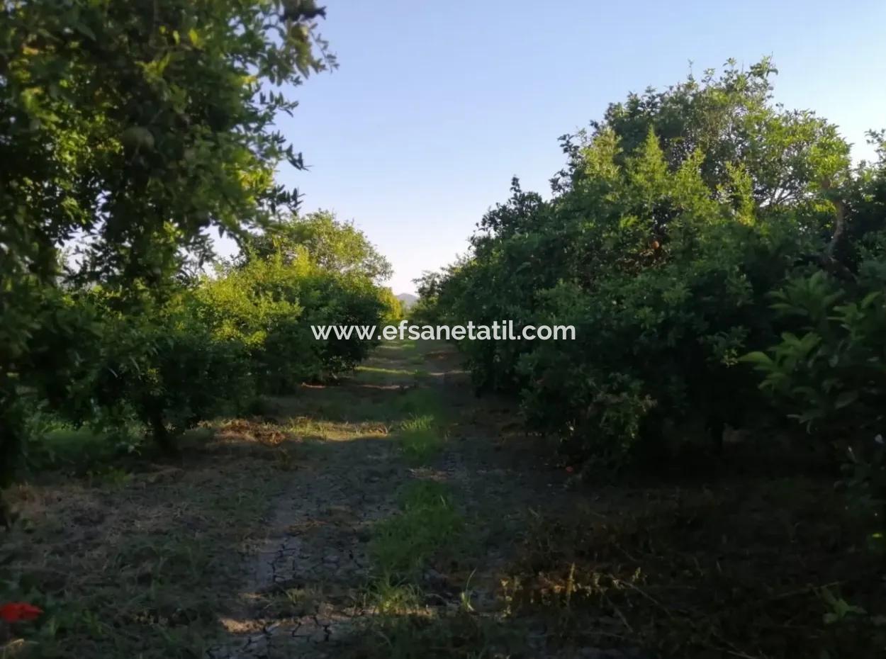 Ortaca Tepearasında Satılık Bahçe