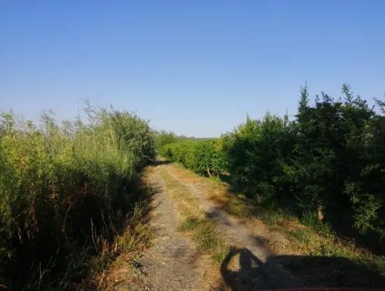 Ortaca Tepearası Nda Satılık Bahçe, Kelepir 35 000 M2