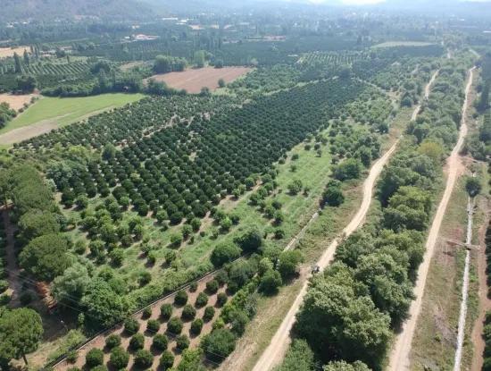 Köyceğiz Beyobası Nda Satılık Portakal Bahçesi, 46.000 M2