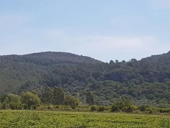 Ortaca Ekşiliyurt Mah. De 26512 M2 Tarıma Elverişli Arazi Satılık