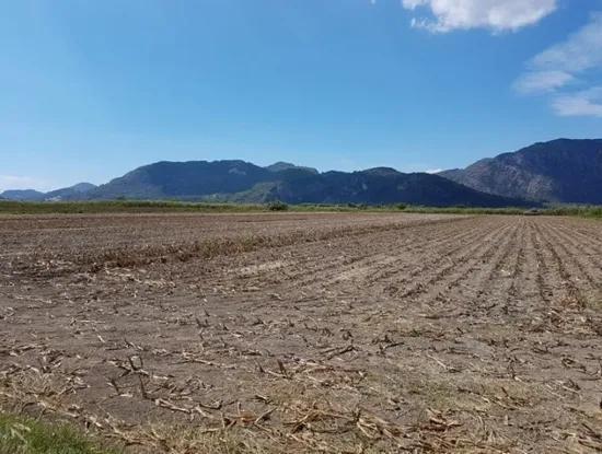 Güzelyurtta Satılık Kelepir Verimli Arazi