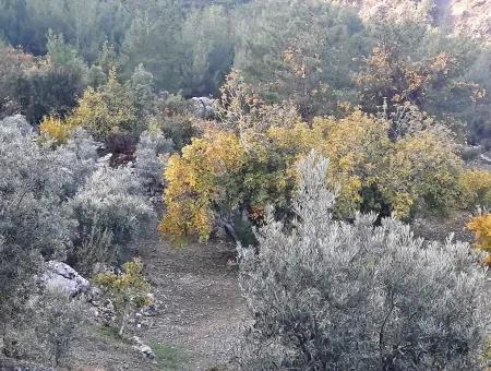 Muğla Dalaman Narlıda Satılık 1800 M2 Kelepir Arazi