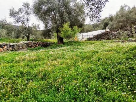 Fethiye Göcek Taşbaşında Satılık Doğa İçinde Müstakil Köy Evi