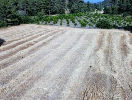 Muğla Dalyan Gökbelde Satılık Yatırıma Uygun 9503 M2 Arazi