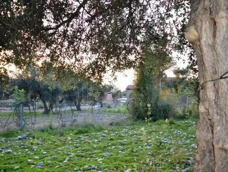 Köyceğiz Zeytinalanı Satılık Göl Manzaralı Arazi